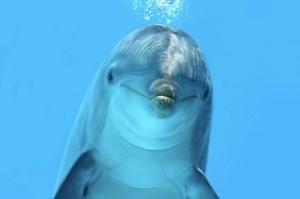 dolphin-120123